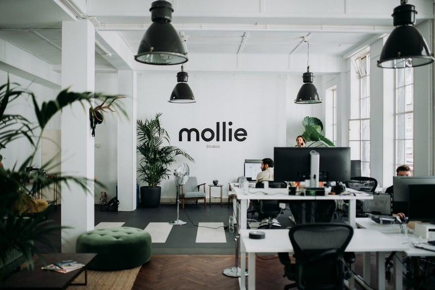 Mollie2