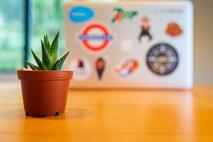 a small plant in a terracotta pot which is standing in front of a laptop on a desk