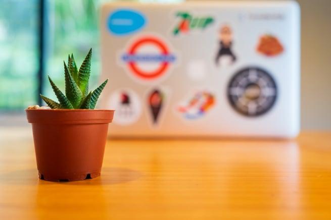 https://www.webs.nl/hubfs/media/images/stock/small-plant-desk-laptop.jpeg